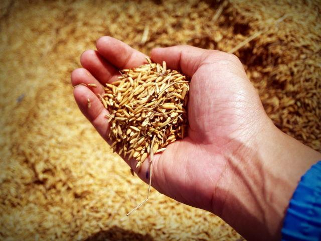 grains as a workout sandbag filler